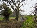 Lane to Rexworthy Farm (1) - geograph.org.uk - 1214554.jpg