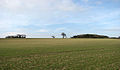 Large field beside the B1436 - geograph.org.uk - 715349.jpg