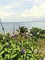 Lavander sea view.jpg