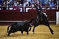 Lea Vicens en la plaza de toros de Málaga.jpg
