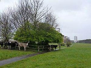 Leazes Park - Image: Leazes Park cows, Newcastle upon Tyne, 18 April 2012