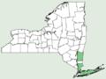 Lechea pulchella var pulchella NY-dist-map.png