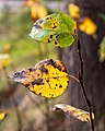 Leif Erikson Park, Duluth 10 25 17 -lakesuperior -leaves -fall (26260899799).jpg