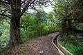 Levada do Furado, Madeira - 2013-04-05 - 90145204.jpg