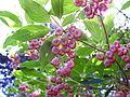 Lilflowers2 (3557118534).jpg