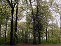 Limmerbrunnen-Altbäume.JPG