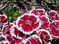 Littleflowers7.jpg