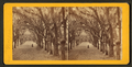 Live Oak Avenue, Bonaventure Cemetery, Savannah, Ga, from Robert N. Dennis collection of stereoscopic views 8.png