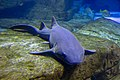 Long Island Aquarium 2018 020.jpg