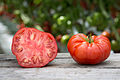 Lufa Farms Beefsteak Tomato.jpg