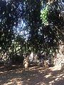 Lugar de descanso rodeado de naturaleza en El Charco del Ingenio, San Miguel de Allende.JPG