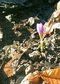 Lule dimri.jpg