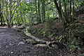 Luxembourg Grunewald Schetzel brook 01.jpg