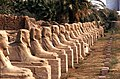 Luxor-Tempel-48-Sphinxalle-1982-gje.jpg