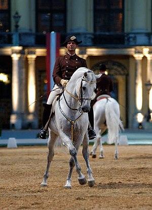 Lipizzan - Lipizzan Stallion, Schönbrunn Palace