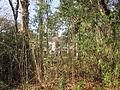 Magnolia Lane Plantation House Side reeds.JPG