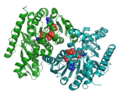 Malate dehydrogenase (Sus) 4MDH.png