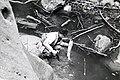 Malibu Creek Steelhead c. 1943 (27807006728).jpg