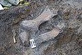 Mammoth bones found at OSU expansion of Valley Football Center - DSC 0419 - 24281878309.jpg