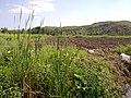 Mammu khora 8 - panoramio.jpg
