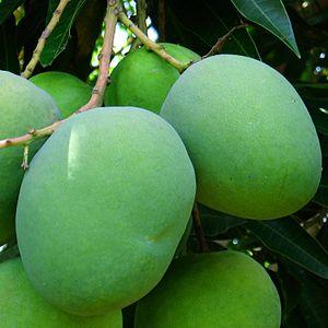 Detail of a green mango.