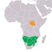 The White Rhinoceros original range (orange: Northern (C. s. cottoni), green: Southern (C. s. simum)).