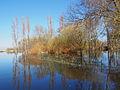 Marais de la Brière à Saint-Joachim au début du printemps.jpg