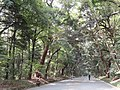 Meiji Shrine - DSC04843.JPG