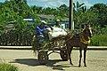 Men with Grass Cart - Cuba.jpg