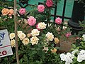 Miniature rose from Lalbagh flower show Aug 2013 8475.JPG