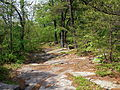 Mocanaqua Loop Trail 2.JPG