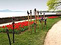 Morges Fete Tulipe 3.jpg