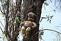 Muñeca en árbol.JPG