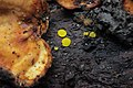 Mushroom (35378786003).jpg