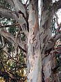 My Favourite Tree in Orange - panoramio.jpg