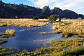 My Public Lands Roadtrip- Dean Creek Elk Viewing Area in Oregon (18908812150).jpg
