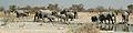 Namibie Etosha Elephant 04.JPG