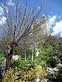 Natura e vecchia torre - panoramio.jpg