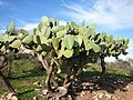 Nature des Monts Beni Chougranes Mohammadia 12.jpg