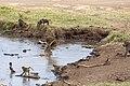 Nature of Ngorongoro Conservation Area (113).jpg
