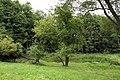 Nature reserve Libouchecké rybníčky in summer 2014 (20).JPG