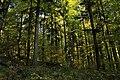 Nature reserve Ptaci stena in autumn 2011 (21).JPG