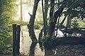 Nebel Plitvicersee (199514823).jpeg