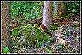 Nembra, 25048 Edolo BS, Italy - panoramio - Gregorini Demetrio (4).jpg