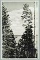 Nervanderin kumpu, Laukanlahti, Mäntyniemi, Nuotsaari, Laukansaari, 1950s PK0139.jpg