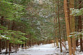 Nescopeck State Park Conifer Zone (1).jpg