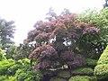 New York Botanical Garden 10.jpg