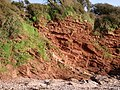 North End of Saltern Cove - Shale and sandstone - geograph.org.uk - 361425.jpg