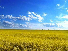 Odessa oblast' field.jpg