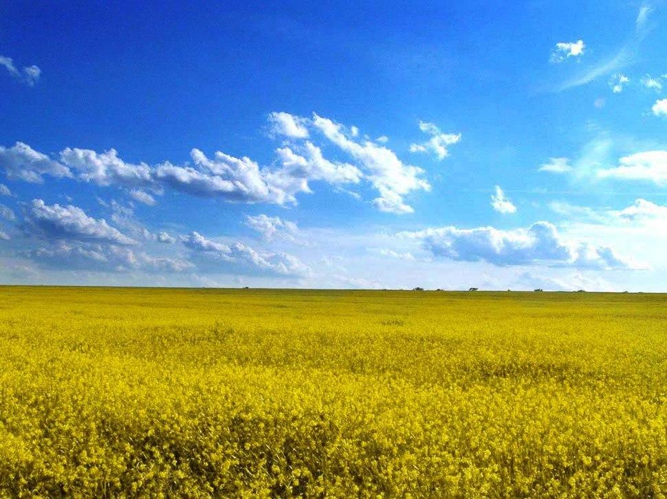 Odessa oblast%27 field